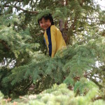 Alaskan Child in Tree